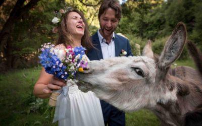 laughing wedding couple and donkey at Okuti Gardens